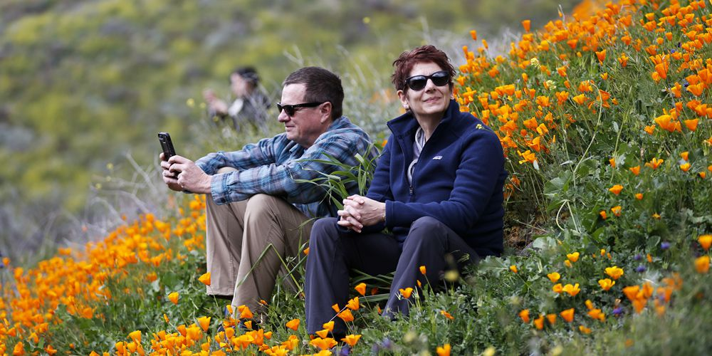 Цветы цветут в американской Калифорнии