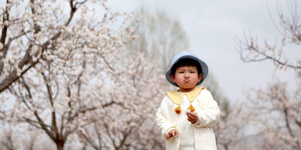 В провинции Ганьсу зацвели абрикосы