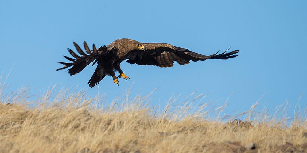 Хулунбуирская равнина -- идеальное место для птиц