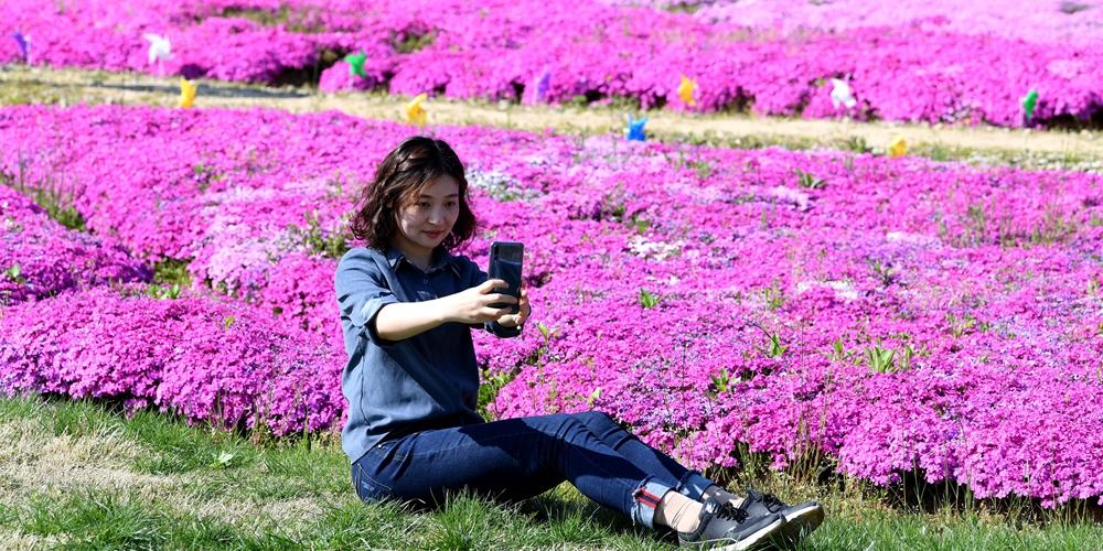 """""""Цветочный туризм"""" в горах провинции Аньхой"""