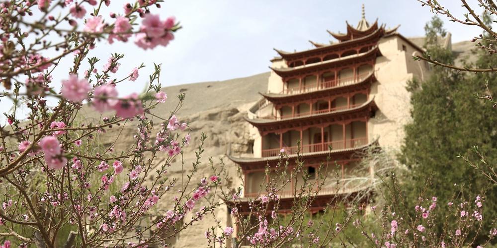 Весенние цветы у пещер Могао в провинции Ганьсу