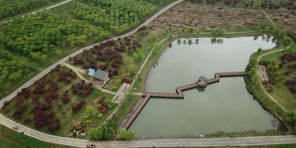 Выращивание саженцев в уезде Фэньси