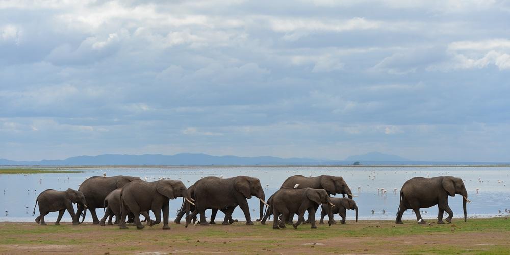 Дикие животные в национальном парке Амбосели