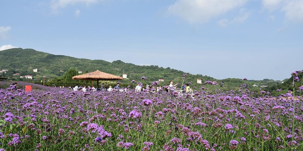 Море цветов на севере Гуйчжоу