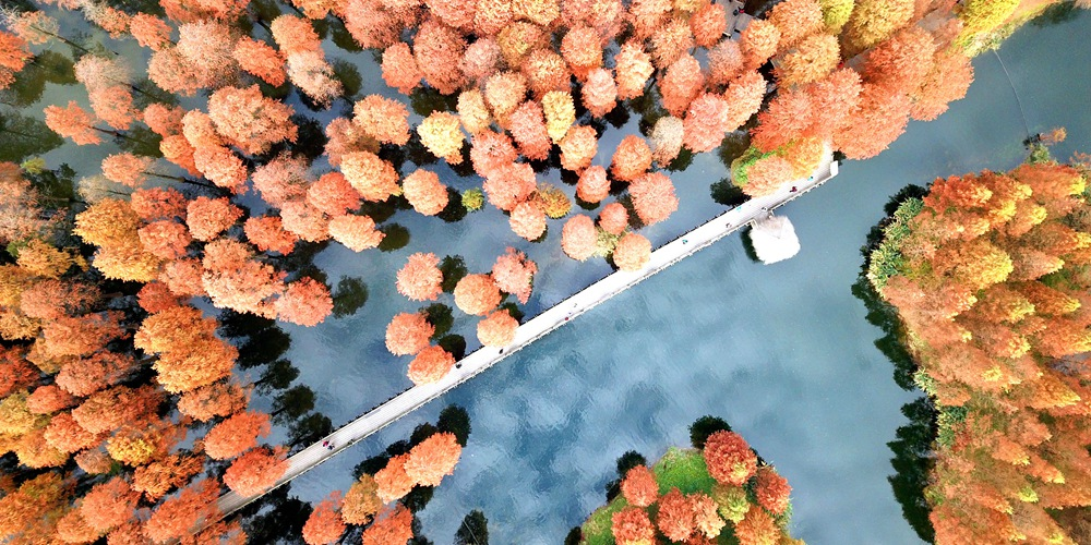 Пригород Шанхая облачился в красный наряд в первый месяц зимы