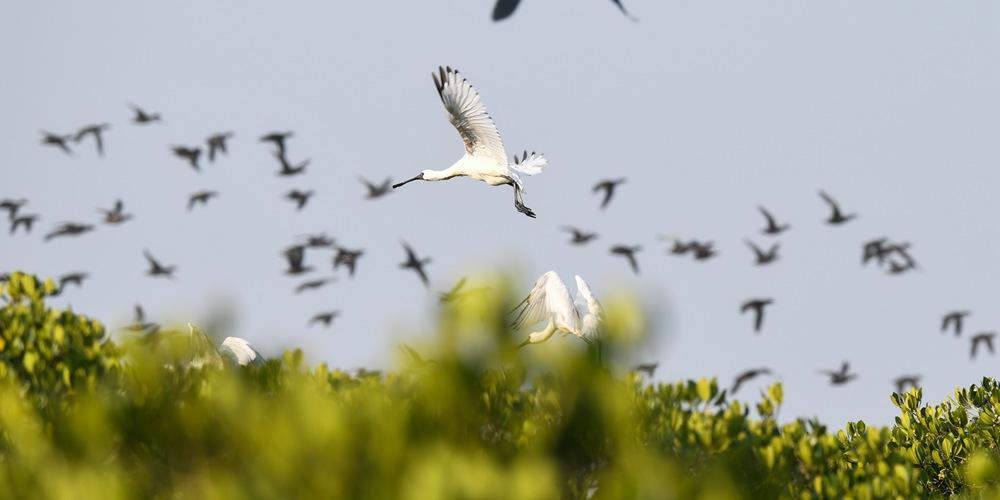 На остров Хайнань слетаются перелетные птицы