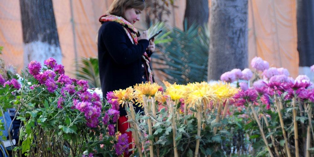 Выставка хризантем в Пешаваре