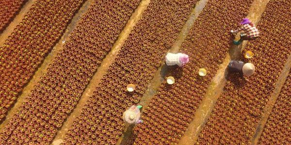 Весенние заботы фермеров в Китае