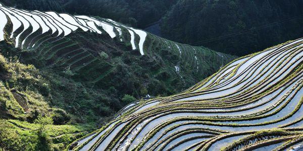 Нефритовый пояс террасных полей в уезде Цунцзян