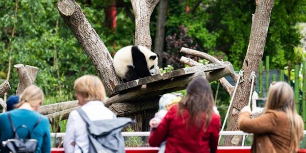 Берлинский зоопарк открывается после карантина