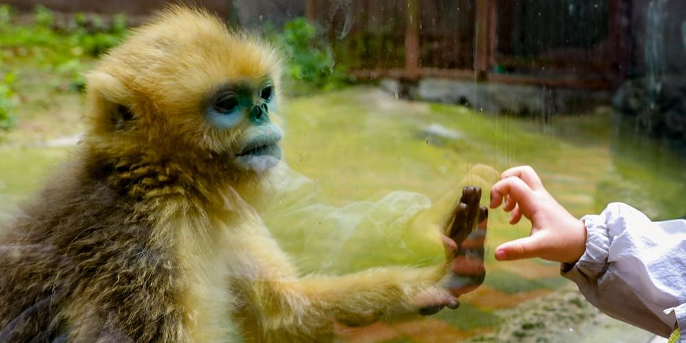 В Гуйяне открылись зоопарки