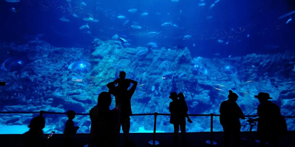Океанариум в Сянгане возобновит работу через два дня