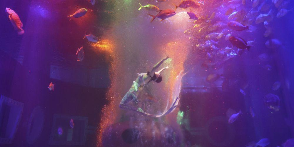 Шоу пловцов в Полярном океанариуме в Харбине
