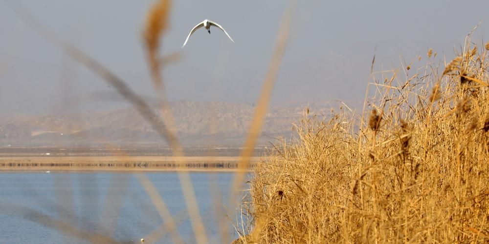 Озеро Хурлэг в провинции Цинхай