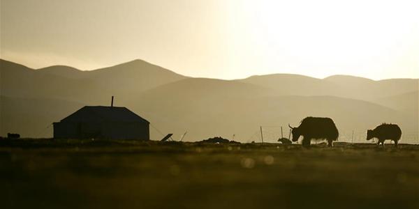 Идиллическая жизнь пастухов в провинции Цинхай
