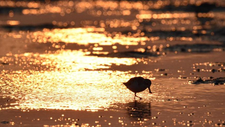На Хайнане провели обследование мест обитания перелетных водоплавающих птиц