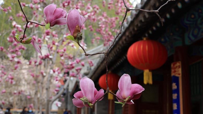 Весенние цветы в древних буддийских обителях