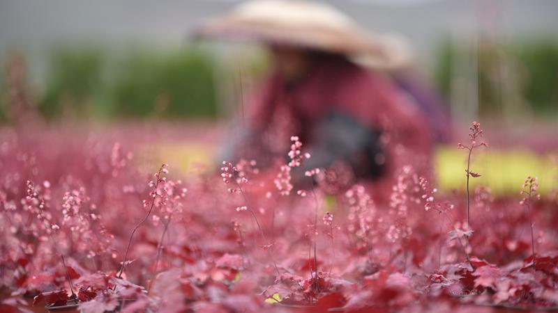 Весенние хлопоты на растениеводческой базе в провинции Гуйчжоу