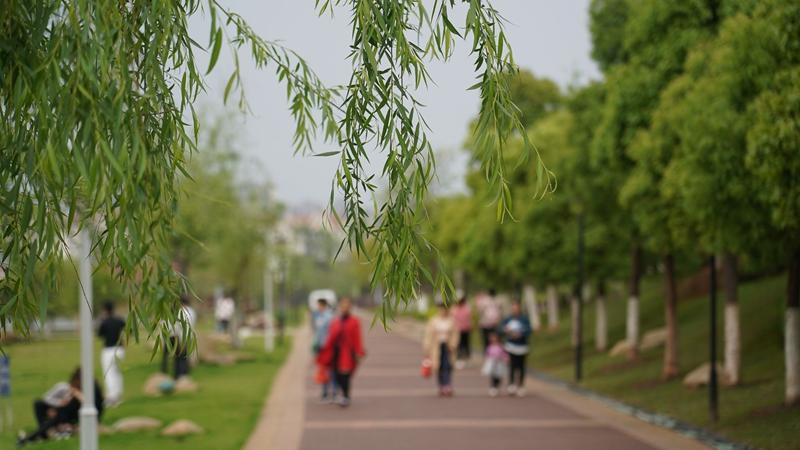 """Весенний пейзаж в парке водно-болотных угодий """"Цзюлунху"""" на востоке Китая"""