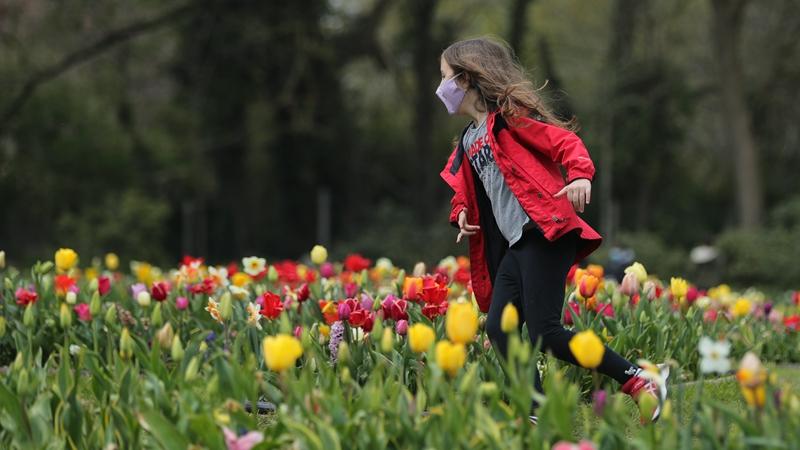 Под Брюсселем проходит международная выставка цветов