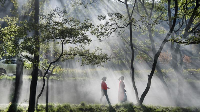 Уезд Лонань улучшает экологию горного хребта Циньлин