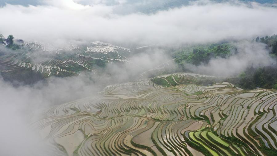 Красота террасных полей в уезде Цунцзян