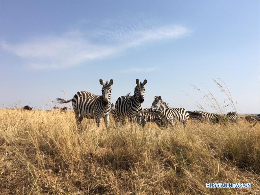 (晚报)(1)马赛马拉大草原上的动物们