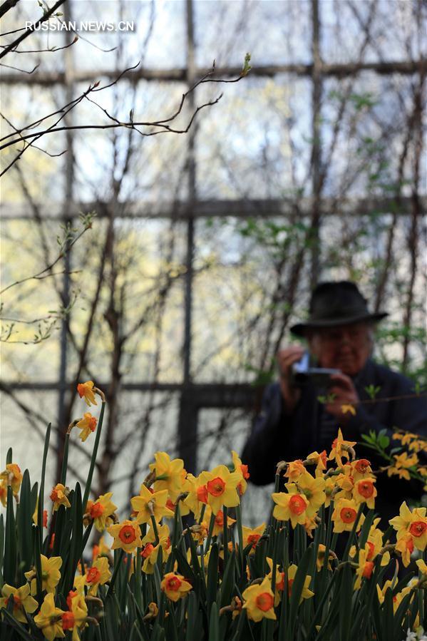 Выставка цветов во Франкфурте-на-Майне